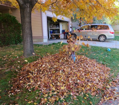 集めた落ち葉を散らかす息子